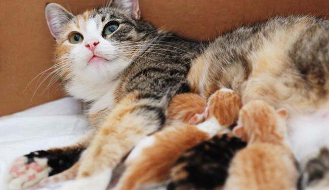 Nằm mơ thấy mèo đẻ