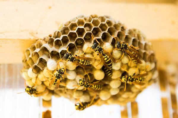 nằm mơ thấy tổ ong